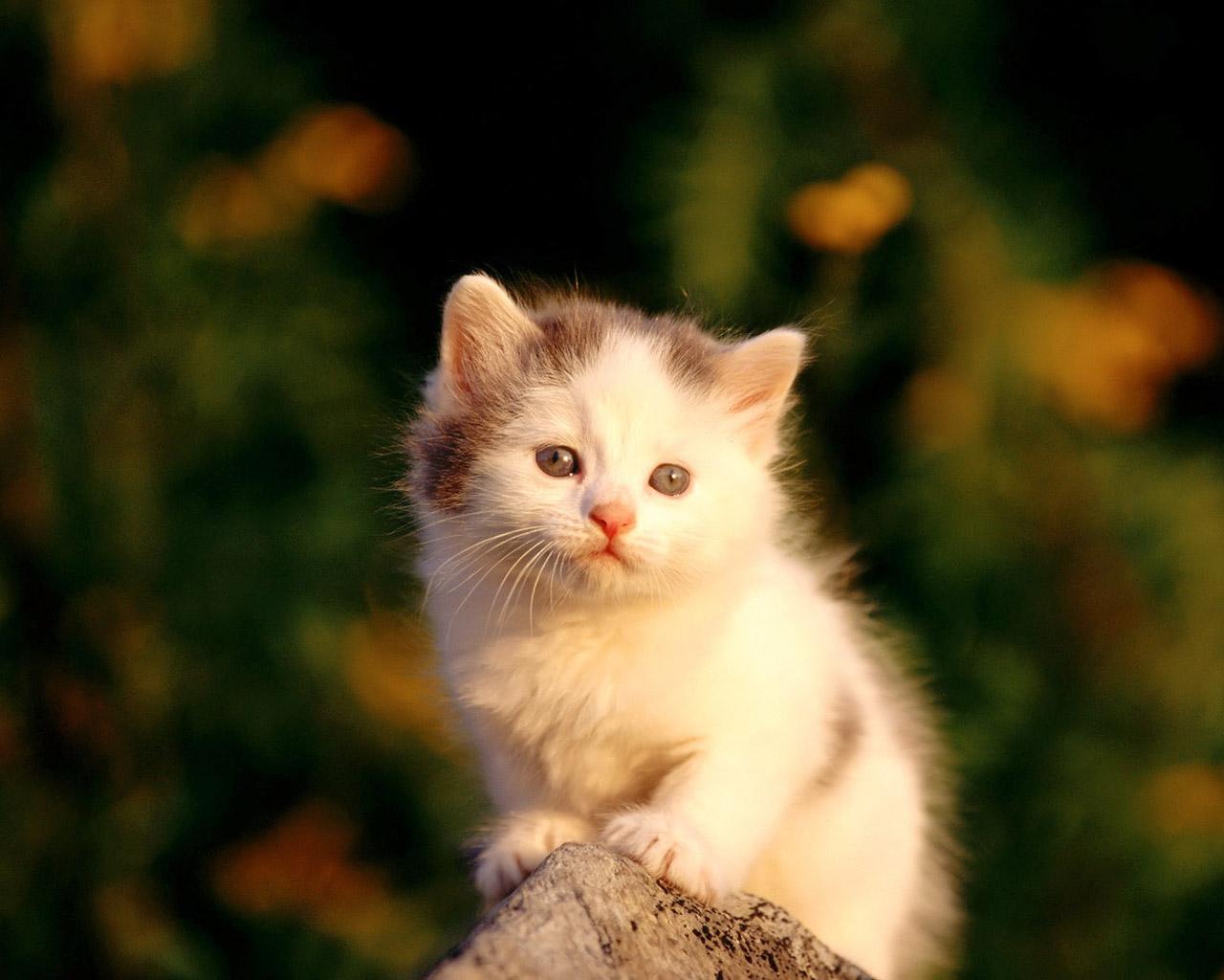 cute kitten wallpaper kittens - photo #5