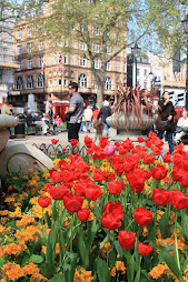Tulips in Leicester Square