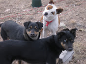 Our dogs...Bailey, Buster and Louie