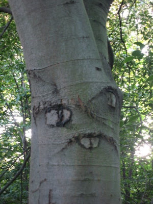 retarded tree