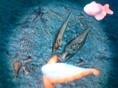 Desmodema polystictum, a plesiosaur and a bream