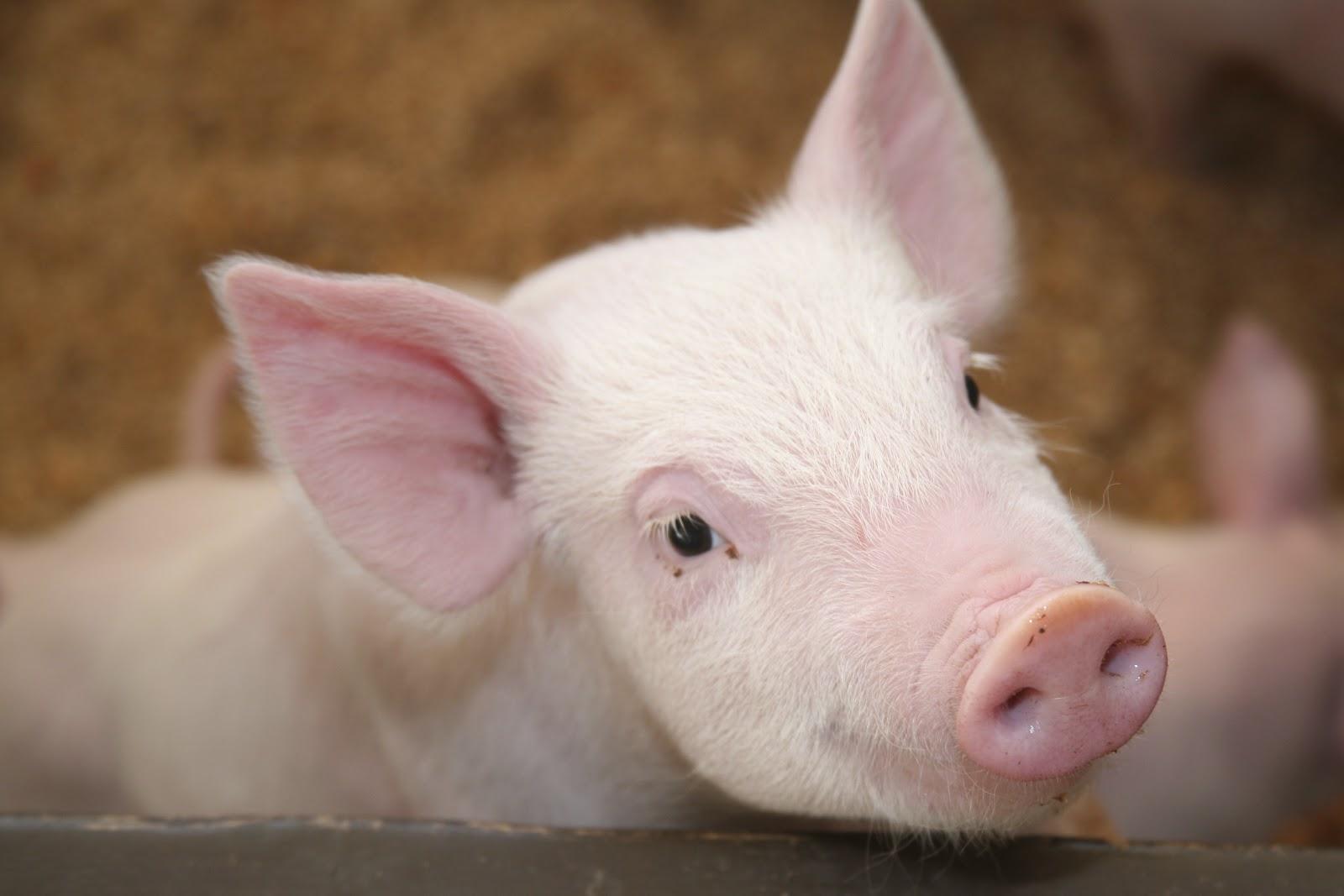 Adote Um Bichinho 50 Frases Marcantes Sobre Os Direitos Dos Animais