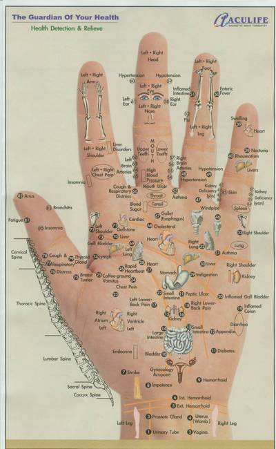 Firebert  Reflex Points  Hands  Feet And Face