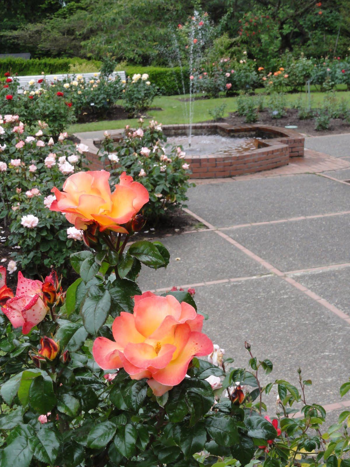 En Tequila Es Verdad I Never Promised You A Rose Garden