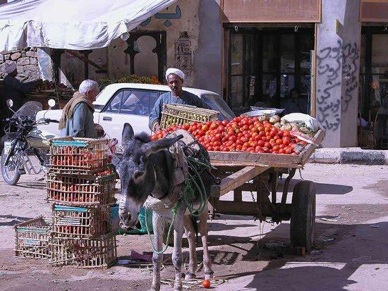 """غلاء الطماطم سببه سرقات الجنرالات المرتزقه وليس جشع الفلاحين و""""الخضراتيه"""""""