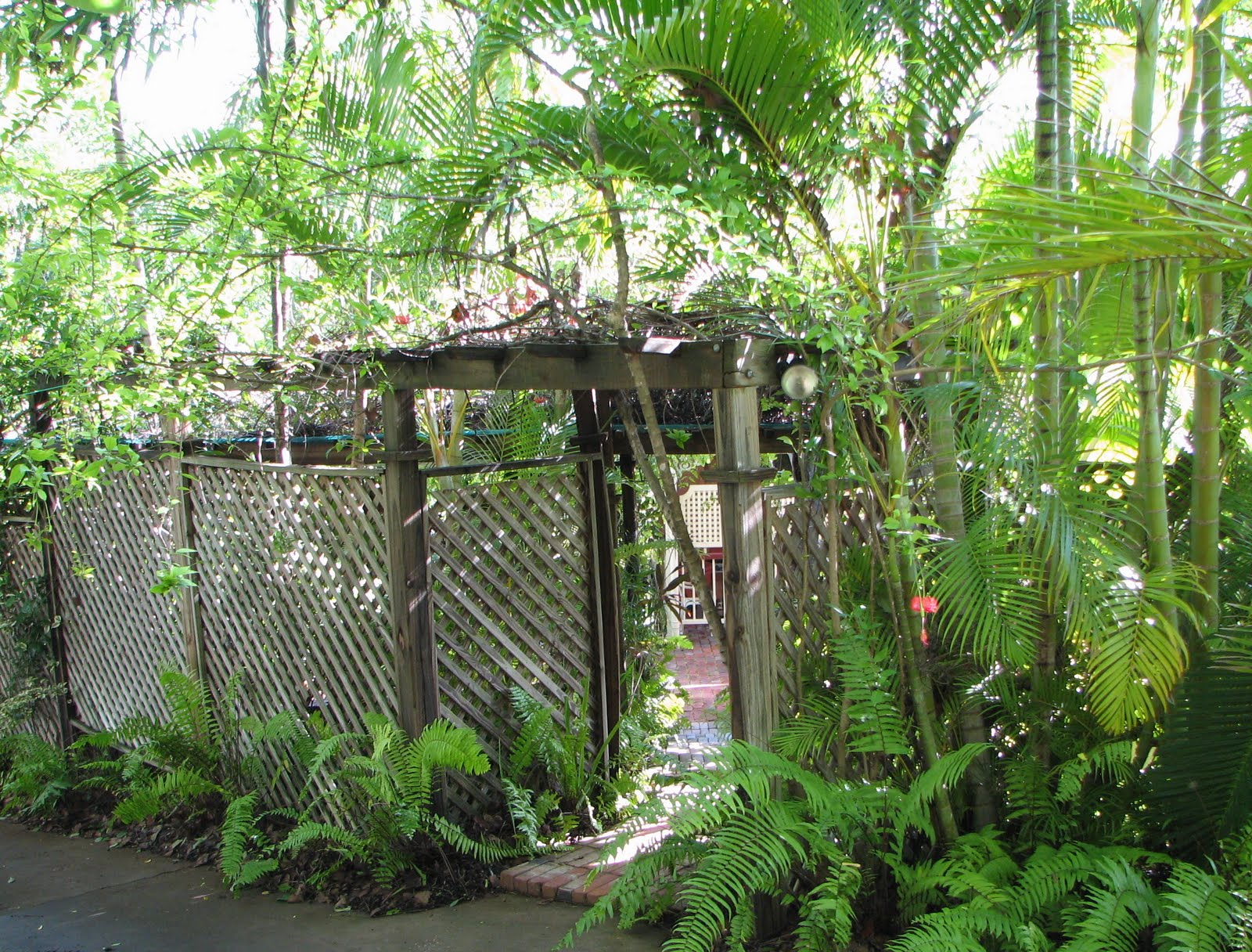 My dry tropics garden my place part 2 the courtyard for Courtyard gardens australia