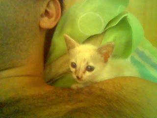 Gata Lili, na primeira semana de vida, descansa no ombro do humano