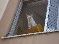 Gata Lili contemplando a vida na janela