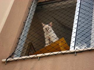 Gata Lili na janela da sala