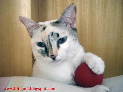Gata Lili e sua bolinha vermelha, fazendo pose de atleta de Ginástica Rítmica