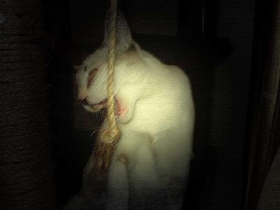 Gata Lili com raiva parece uma pantera selvagem