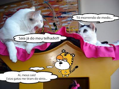 Lili e Malu brigam por espaço no telhado da casinha para gatos. e o amigo imaginário Zóing observa tudo