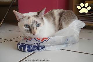 Gata Lili dentro do saco plástico