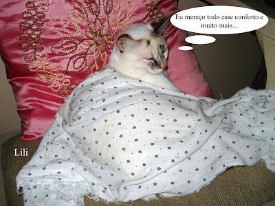 Gata Lili, enrolada no lençol, dorme no sofá da sala