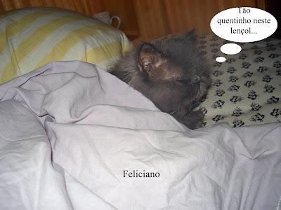 Gato Feliciano, enrolado no lençol, dorme na cama dos humanos