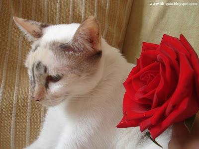 Gata Lili e a Rosa Vermelha