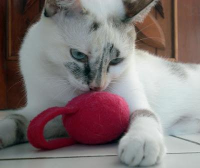 Gata Lili brincando com seu ratinho vermelho