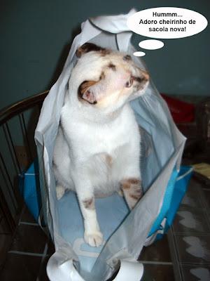 Gata Lili dentro da sacola de plástico