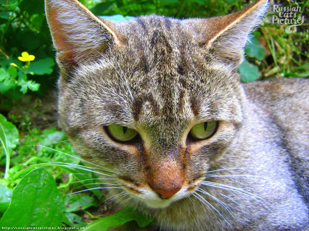 Upset Tabby Cat