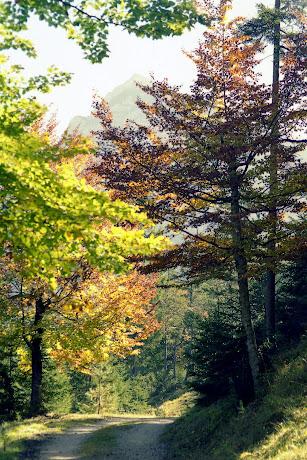 Scharnitz Isartsteig -Nederweg, Blick ins Karwendel - - Wandern im Karwendel