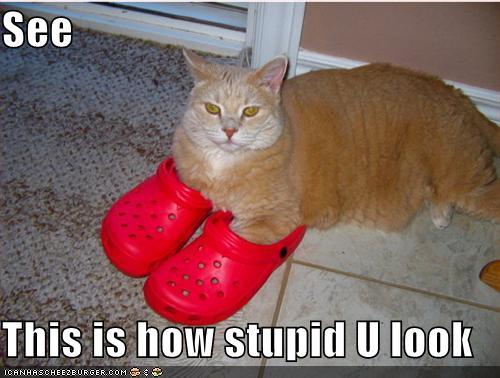http://1.bp.blogspot.com/_Sk9S5J-YD-w/SwHEGTU4L1I/AAAAAAAAAHA/SRlVbCHjdDw/s1600/funny-pictures-red-shoes-cat-stupid.jpg