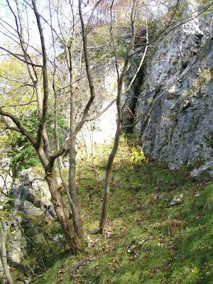 Pukotina u stijeni