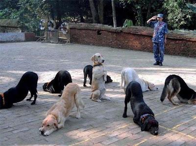 Anjing yang Sangat Terlatih