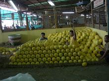 Pedagang Jeruk Bali