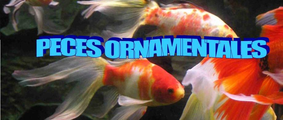 Peces ornamentales peces ornamentales for Criadero de peces ornamentales