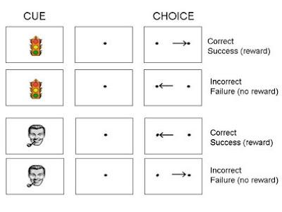Imágenes utilizadas en el experimento, y que fueron mostradas a los monos para que éstos miraran a derecha o izquierda a cambio de una recompensa