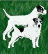 Parson Jack Russel Terrier Club Österreich
