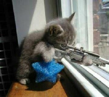 LA FOTO DE .... - Página 4 Gato_pistola