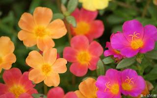 Wallpaper flori de primavara