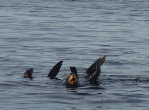 Silly Sea Lions