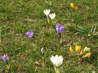 Цветочки на лужайке
