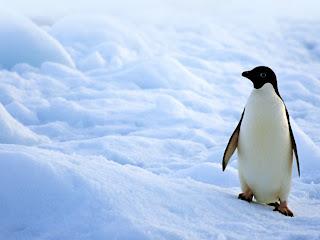 external image pinguino1024x768.jpg