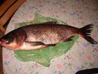 Bulgaria Celebrates St Nicholas Day (6th December) with Fish
