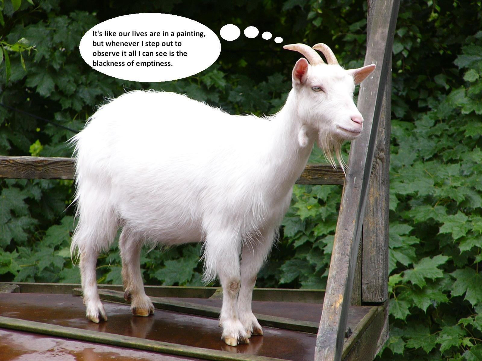 Sad Goat: Cool Enough I Guess.: Animal Thoughts