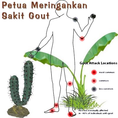 Petua Gout