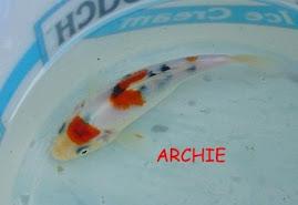 Koi Archie