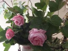 Las primeras rosas de mi jardín
