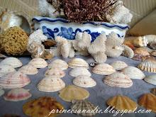 conchas del mar
