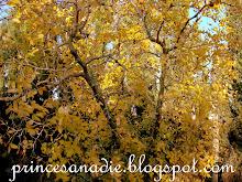 mi encuentro con el otoño