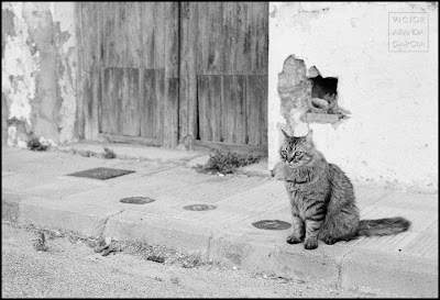 foto de un gato en Fortaleny