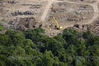 Deforestación y Cambio Climático con Burger King