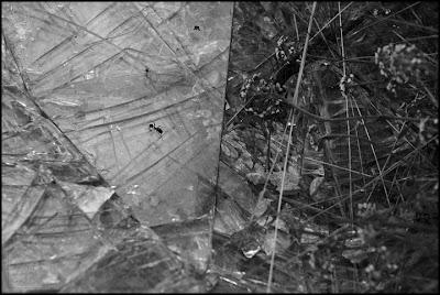 hormiga sobre cristales