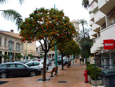 Menton Orange Trees