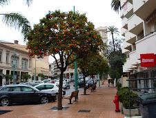 Menton Orange Trees