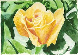 Una rosa per a Josep Lluís
