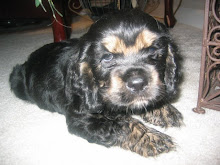 Shug at around 8 weeks... 2007